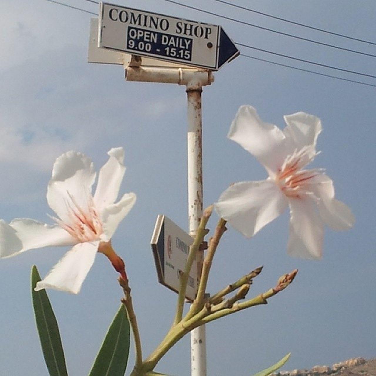 Sky Flower Whiteflower Visitcomino