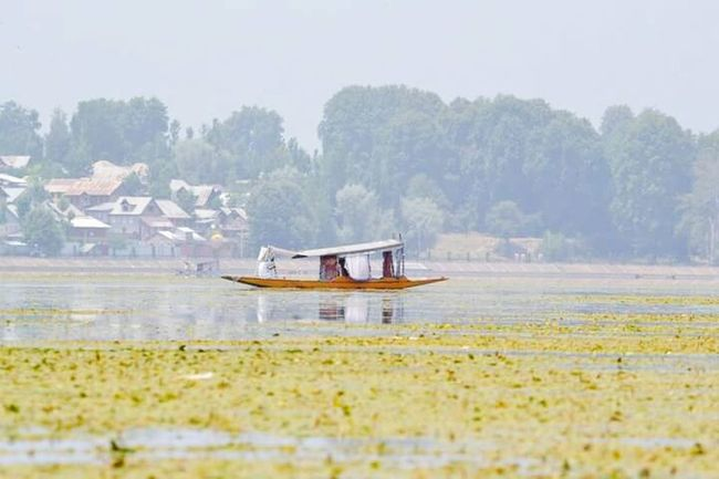 Srinagar Kashmir Water Boat Transportation Nautical Vessel Tree Mode Of Transport Waterfront Nature Tranquil Scene Scenics Tranquility Day Surface Level Riverbank Sea Beauty In Nature Non-urban Scene Shore