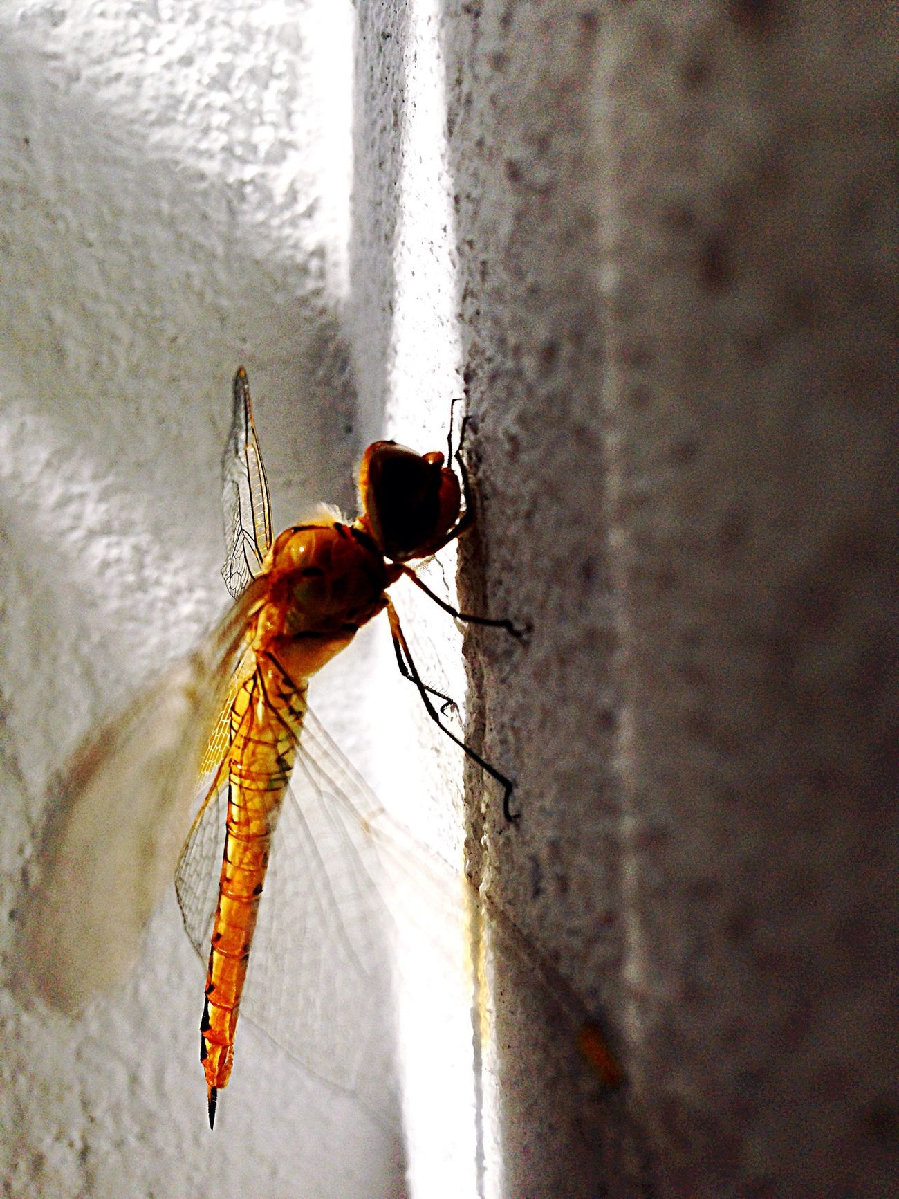 A little Dragonfly at the wall Hello World Enjoying Life Beautiful Nature Relaxing First Eyeem Photo