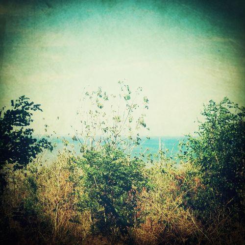 Among trees Lasem  Sea Sightseeing View