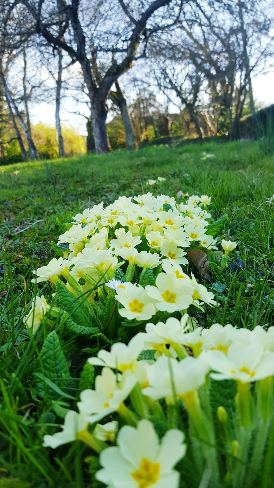 Flower Growth Nature Beauty In Nature Freshness Fragility Plant Flower Head Green Color Field Yellow Springtime Outdoors No People Blooming Day Tree Close-up Crocus