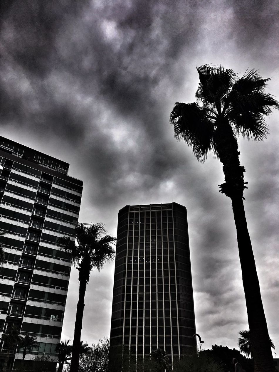 Stormy buildings Architecture Building Exterior Built Structure Low Angle View Sky City Cloud - Sky Skyscraper No People Outdoors Development Tree Tall Day EyeEm Gallery Alleyezonmayphotography Check This Out EyeEm Best Shots Popular Photos Phoenix, AZ