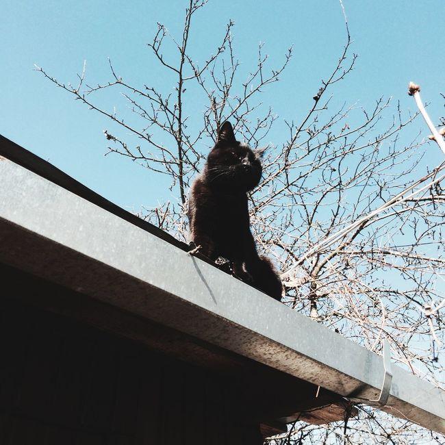 Hello World Enjoying Life Cat Animals
