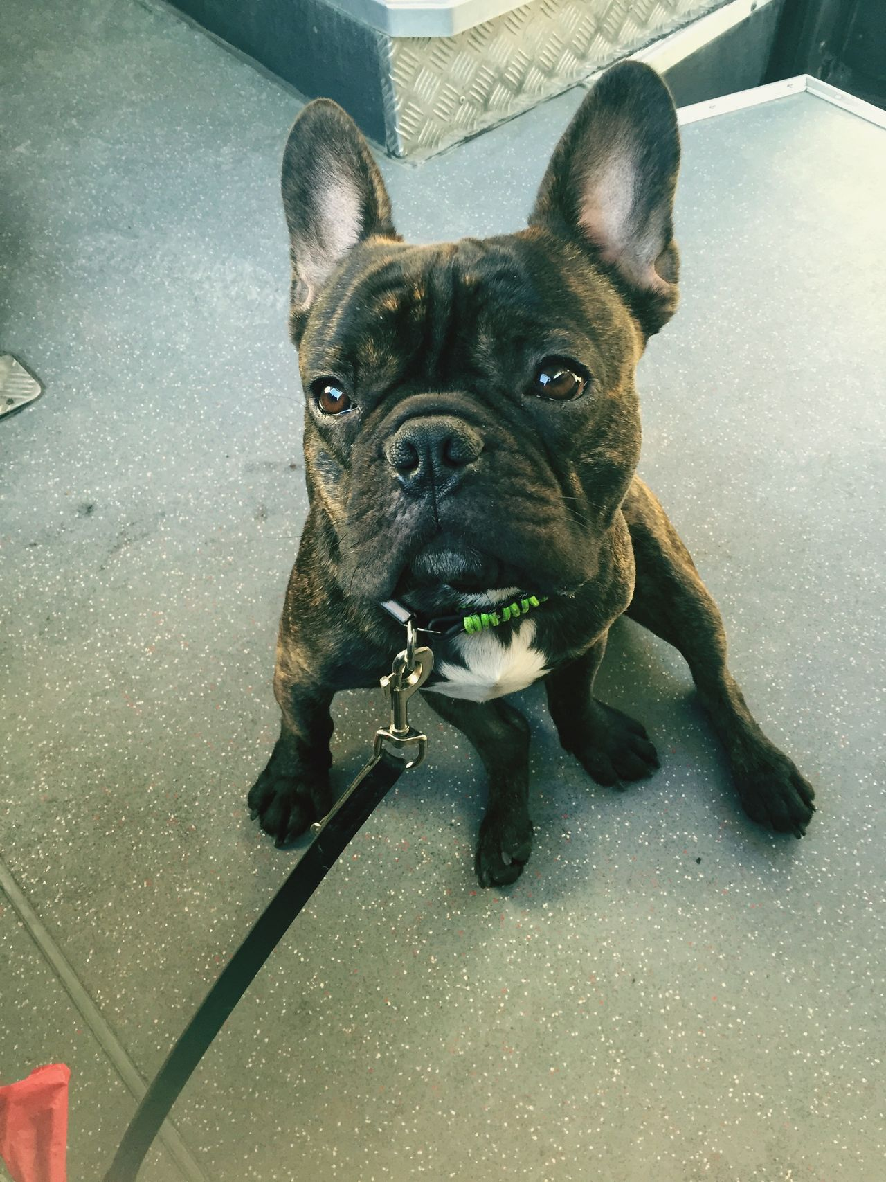My Dog Is Cooler Than Your Kid. Bulldog French Bulldog Frenchbulldog My Dog My Dogs Are Cooler Than Your Kids Dogs Cute Pets I Love My Dog Frenchie