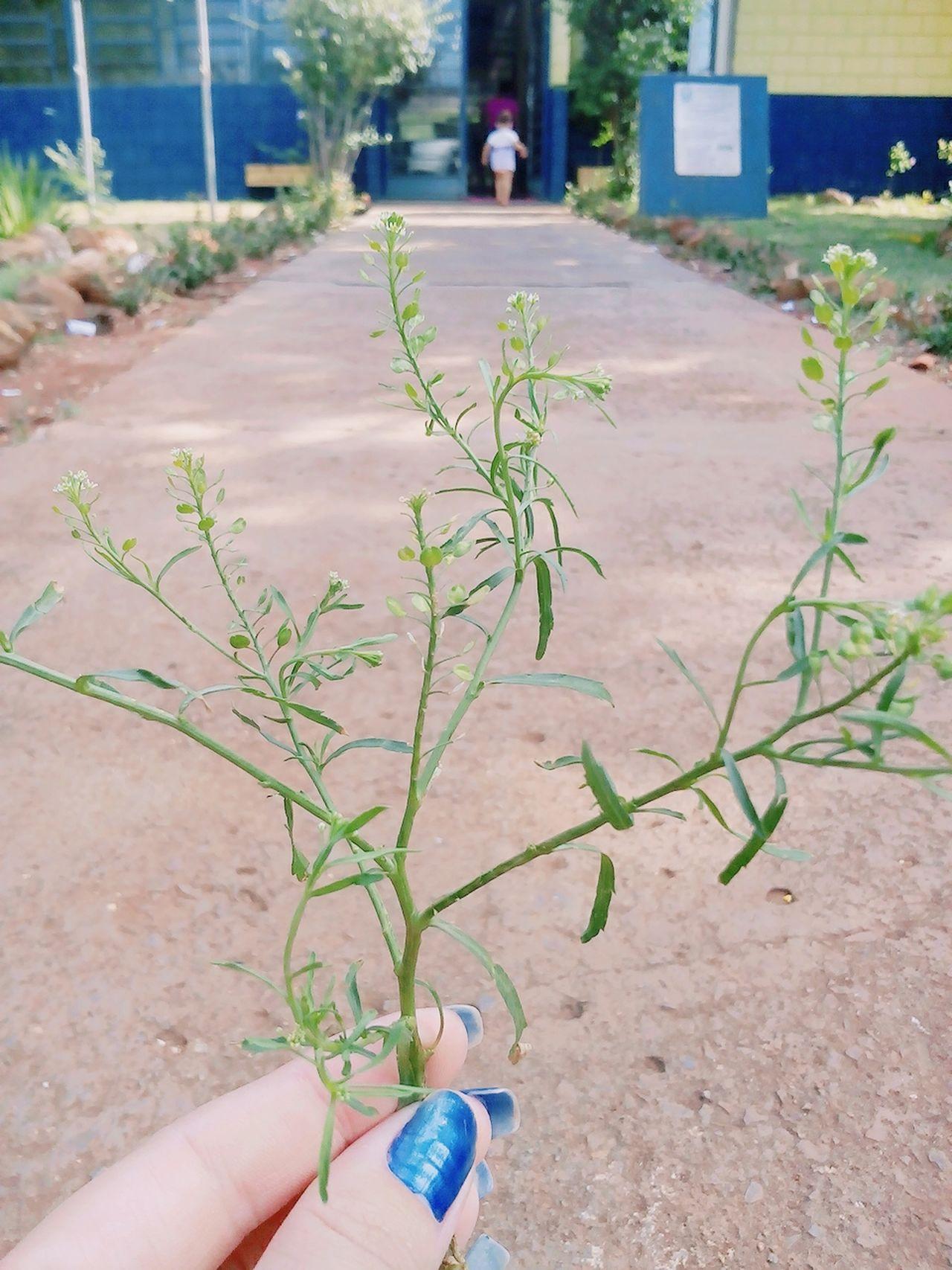 Folha Leaf Tree Arvore Mao Hand Criança Chrildren School Escola