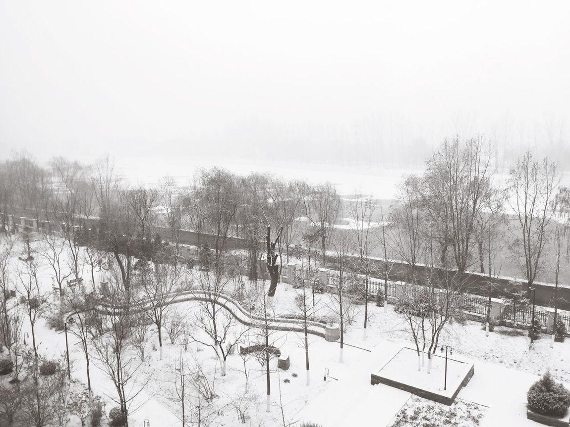 下雪了,一片白茫茫的景象,真美