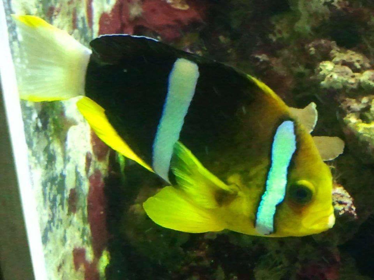 Underwater One Animal Sea Life Swimming Yellow Multi Colored Niagara Falls Niagara Falls NY Aquarium Life Aquarium Fish Animal Fin