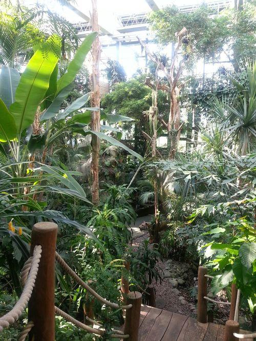 Biosphäre Potsdam Jungle Dschungel