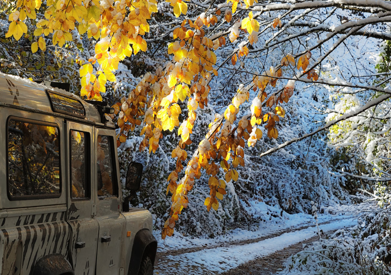 Snowy Backroads Backroads Beauty In Nature Bolu..TURKEY Branches Cold Temperature Land Vehicle Leaves Mode Of Transport Mountains Nature Outdoors Reflection Reflections In The Glass Windows Roads Roadscenes Snow Transportation Tree Treescape Winter Winter Wonderland Wintertime