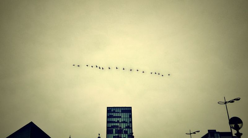 Albert Docks Birds In Flight City Life Clear Sky Liverpool, England Urban Vignette
