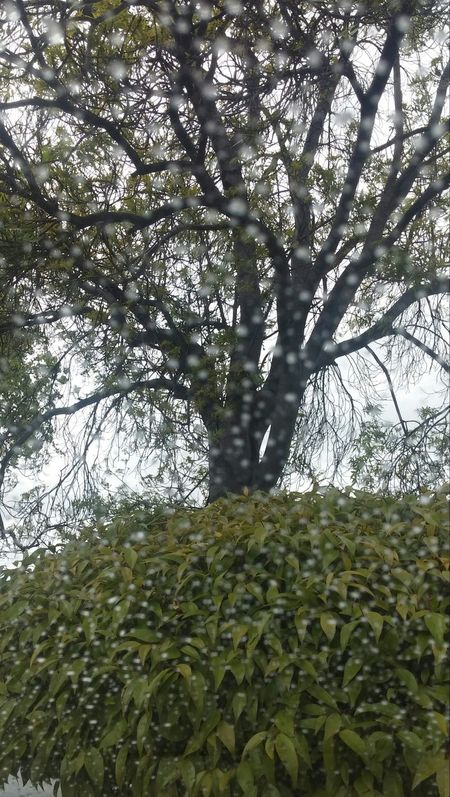 Rain adds it's own naturel effects. Rain ☔ Relaxing No Effects Needed For Nature 🌿🍂🌱🌵🐾☁⚡🌝
