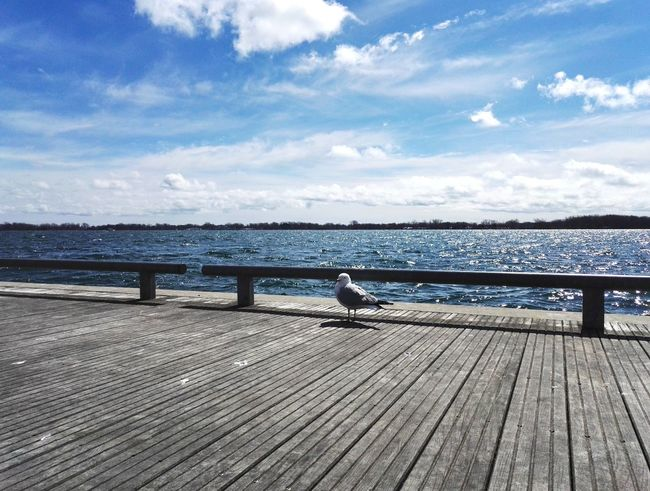 Seagull Lake View Lakeside Lakeshore Water_collection Spring Hello World Enjoying Life Cityscapes Tourist