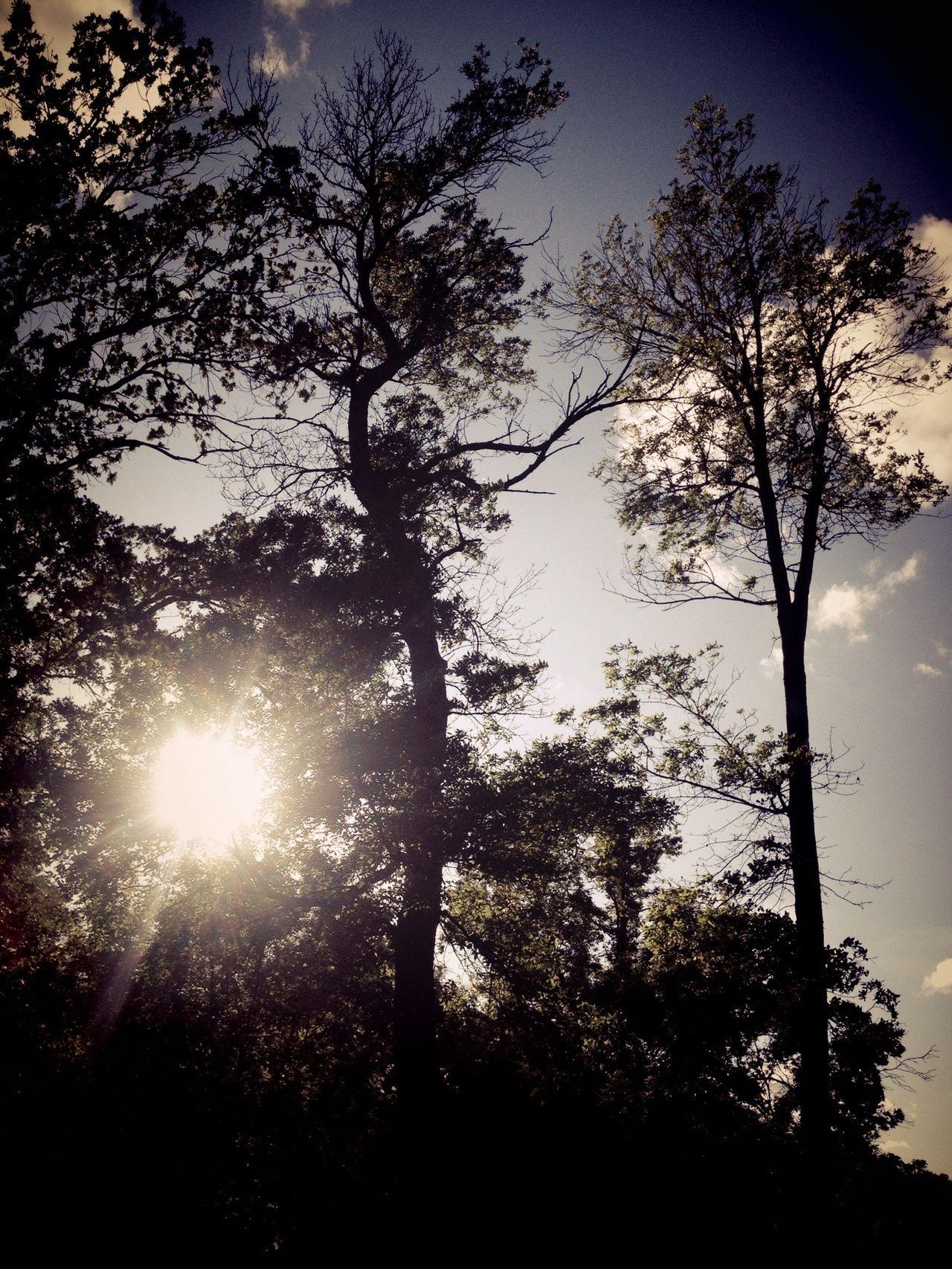 Trees Sunset_collection Sun Shining Sunset Peace And Quiet Johnson Park Moorhead Moorhead, Mn TreePorn