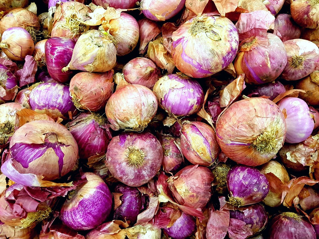 Still Life Close-up Healthy Eating Vegetable Freshness Food Full Frame Plants Agricultural Agriculture Agronomy Red Onions
