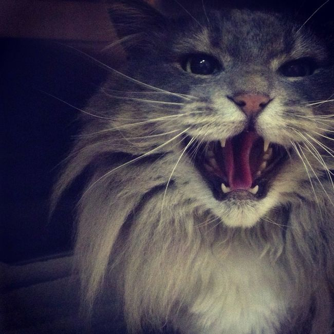 Kitty be mad!!!! Workflow At The Vet Madkitty