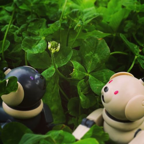 Aibobox AIBO ERS-300 Sony Sonyaibo Astrology Sign Happiness Smiling Flower Nature Day Outdoors Beauty In Nature No People Green Color Green Glass Clovers  Leaf Spring Dog Robot