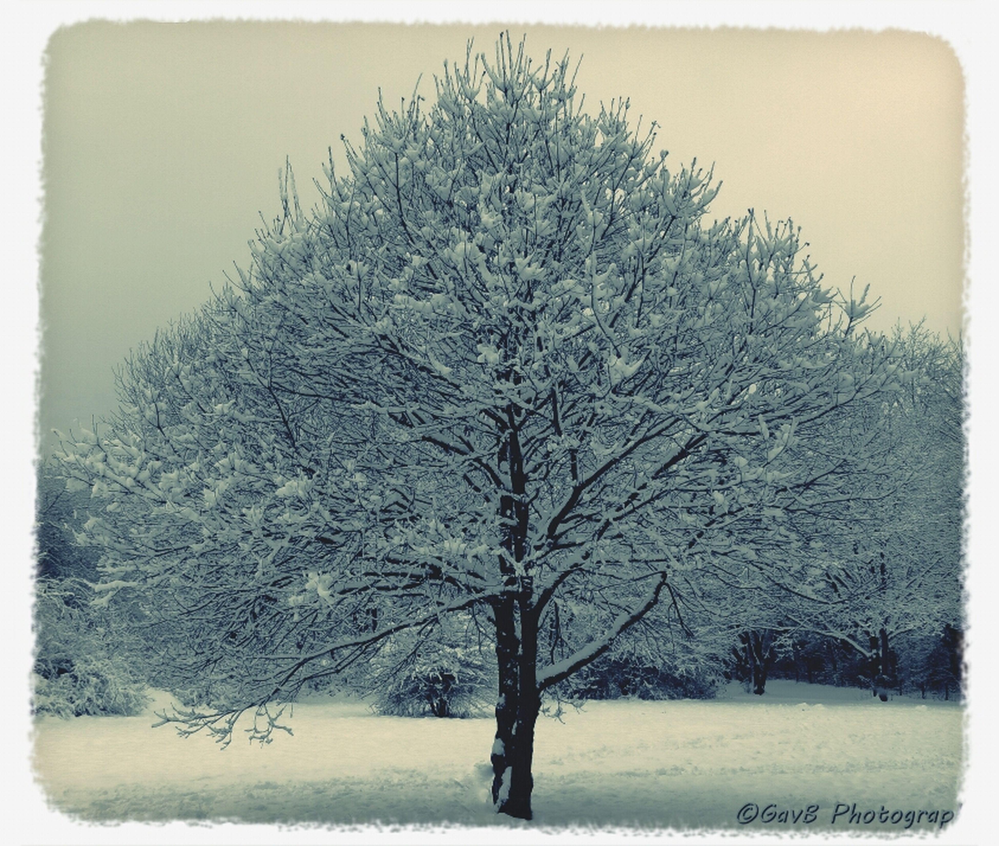 Tree Snow Winter Wonderland Winter Trees
