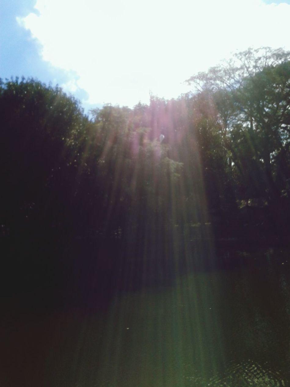 Sun ☀ Nature Photogr Urbà