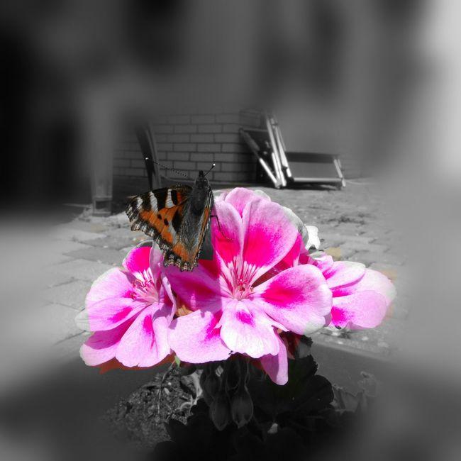 Garden At Home Butterfly First Eyeem Photo