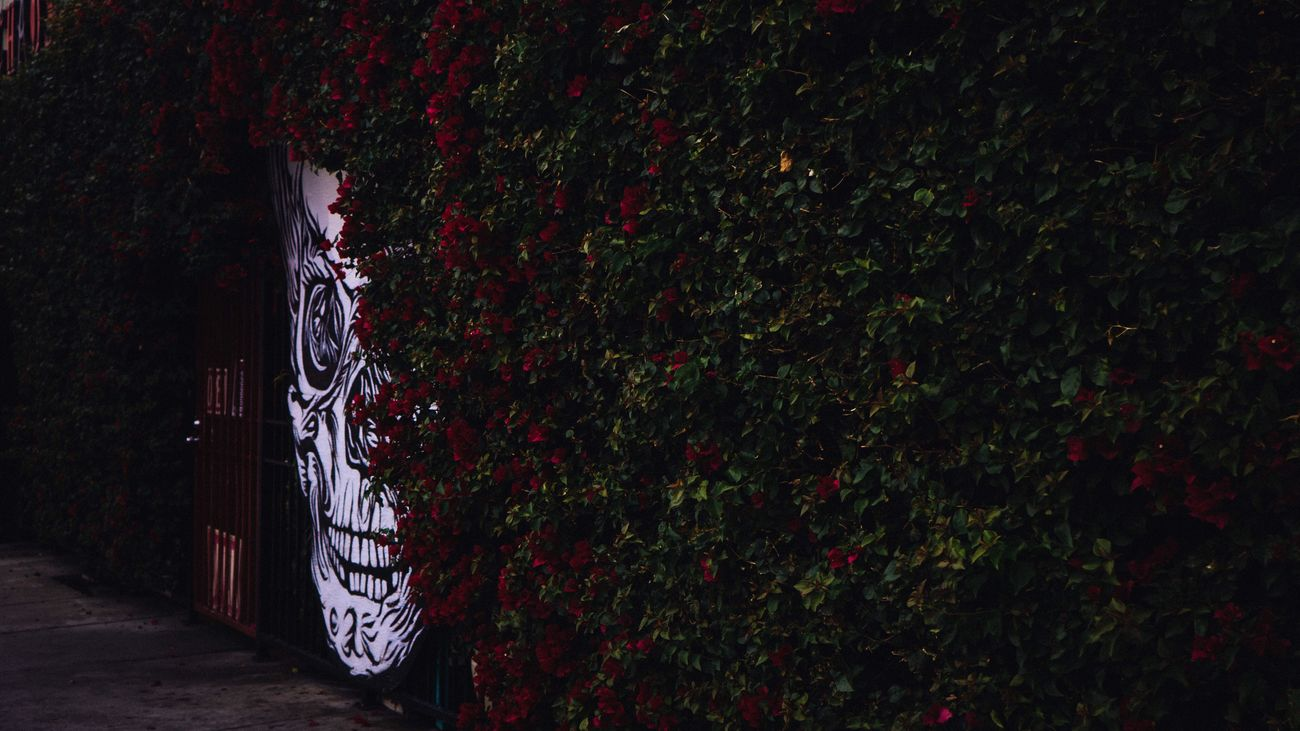 Museum of Death Creeper Plant Sony Sonyalpha Sony A6000 Sony α♡Love Supreme Palace Supremeshooters Supremenyc Hollywood Losangeles