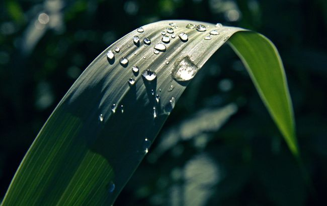 Beauty In Nature Close-up Drop Drops Fragility Leafs Nature Nature Nature Photography Nature_collection