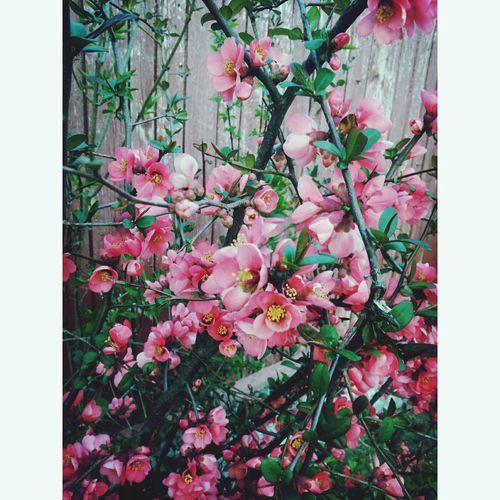 lovely Flowers Nature Spring Flowers Spring