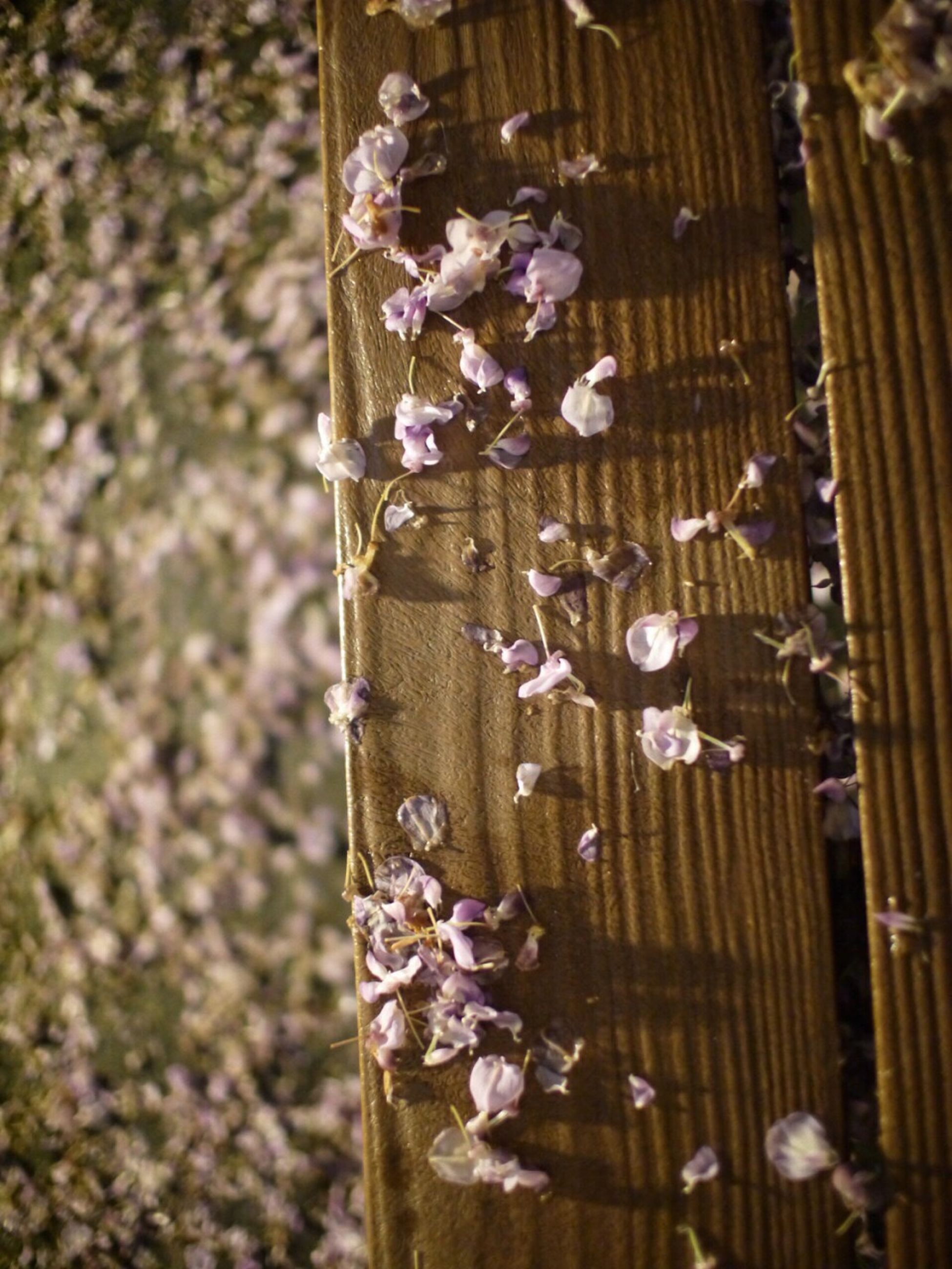 close-up, focus on foreground, wood - material, flower, freshness, day, fragility, wooden, outdoors, decoration, selective focus, pattern, hanging, no people, metal, nature, part of, growth, still life
