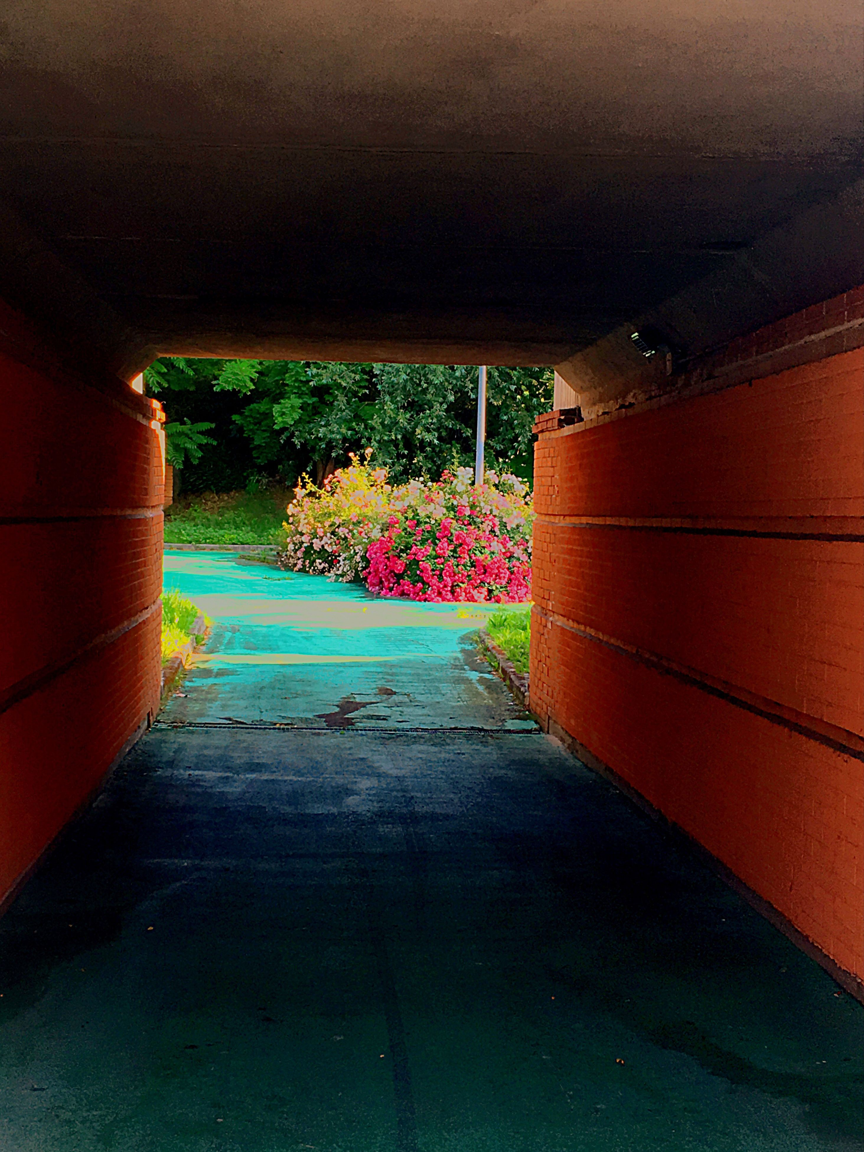 the way forward, architecture, built structure, wall - building feature, building exterior, narrow, plant, house, wall, diminishing perspective, empty, footpath, walkway, potted plant, street, no people, arch, day, steps, pathway