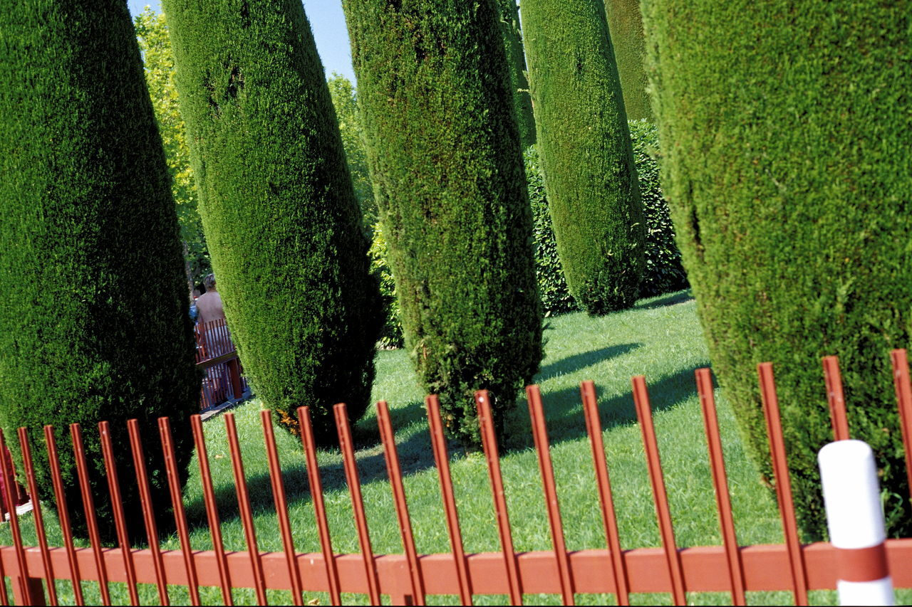 Close-up Cypress Cypress Trees  Day Enclosure Fence Grass Green Green Color Growth In A Row Italy No People Outdoors Rust-coloured Sirmione