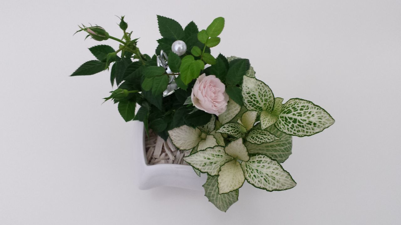 Beautiful stock photos of muttertag, Decor, Decoration, Flower, Fragility