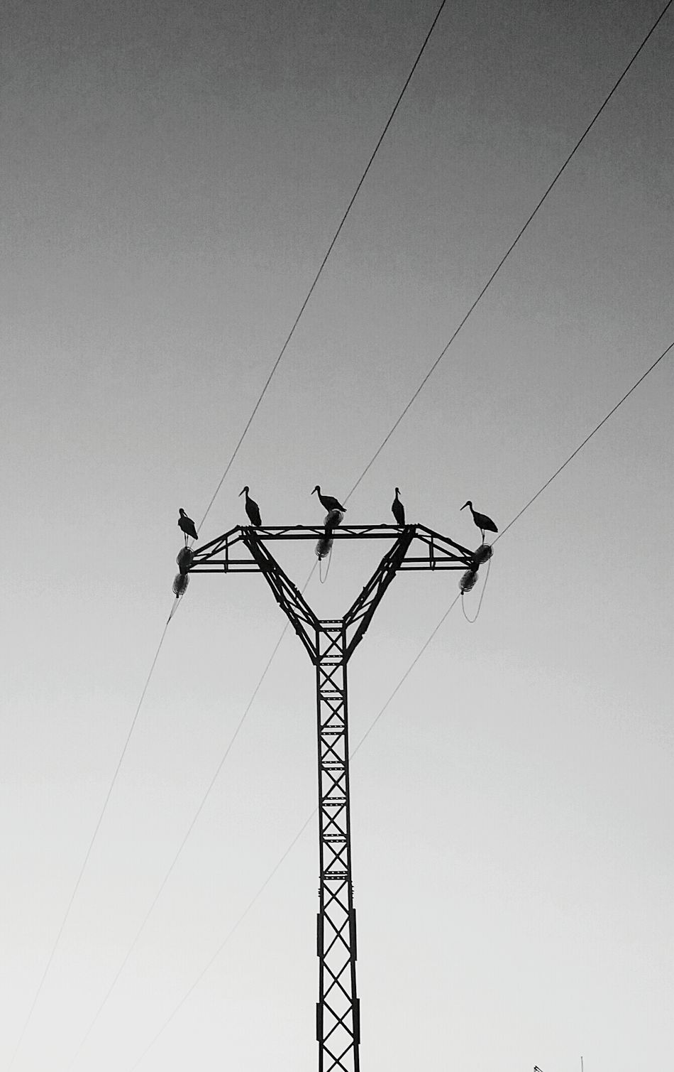 Animal Themes Outdoors Electricity Tower stork First Eyeem Photo