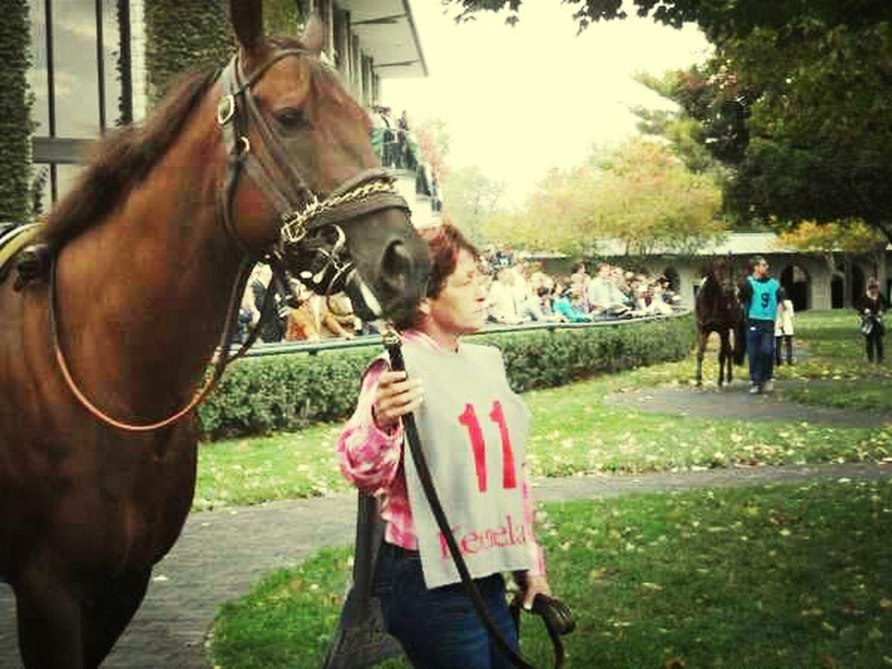 Fall Horses Racetrack Fall Meet Keeneland
