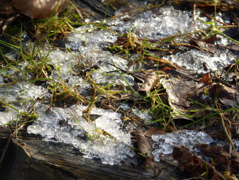 Frozen winter place .. :-) Close-up Cutting Trees Day Frozen Frozen Nature Frozen Tree Frozen Wood Gnomeworld Nature Nature Photography Nature Place No People Outdoors Silent Moment Snow Day Tree Trunk Tree Trunk Art Tree Trunk Close Up Tree Trunk, Tree, Fallen Tree Wild Nature Winter Trees Winter Wonderland Wood - Material Wood Carving Wood Natural
