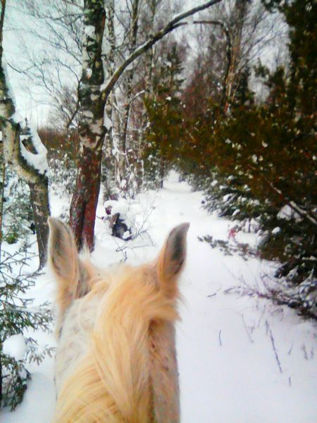 #horse Snow One Animal Tree Forest Day Nature No People Cold Temperature Winter