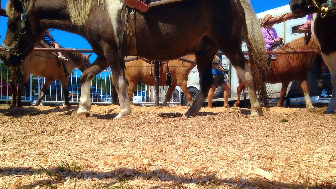 Pony Rides From My Point Of View Pony Horse Fair Farm Ladyphotographerofthemonth Point Of View Perspectives Open Edit Ride