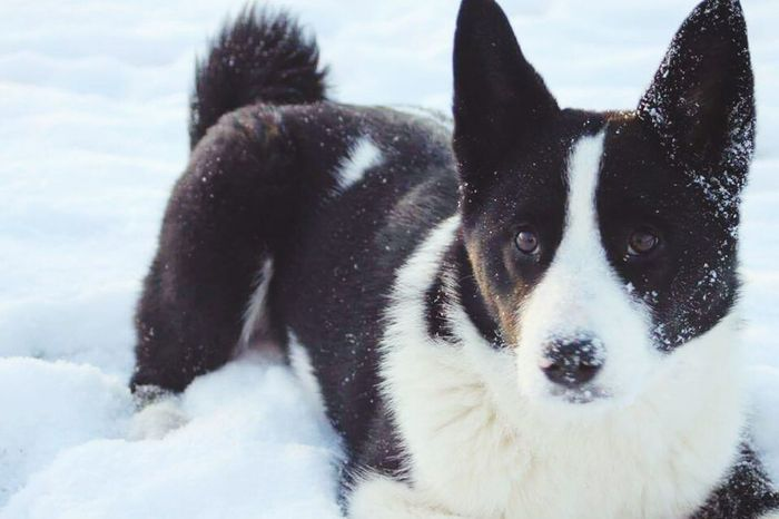 Blackandwhite Dog Love Camera Picoftheday Picture Instagood Pictures Sweden Insragram  Winter Wintertime Beautiful Lovleypic 🐶 @belaveress 👌