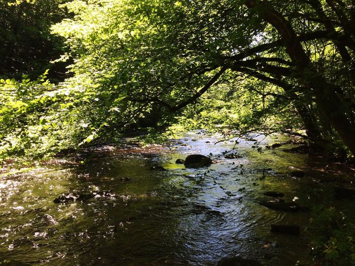 River View Belgium Landscape Hiking Trees Tree Leaves Sun Reflection River Nature Nature Photography Walking Around Summer Summertime