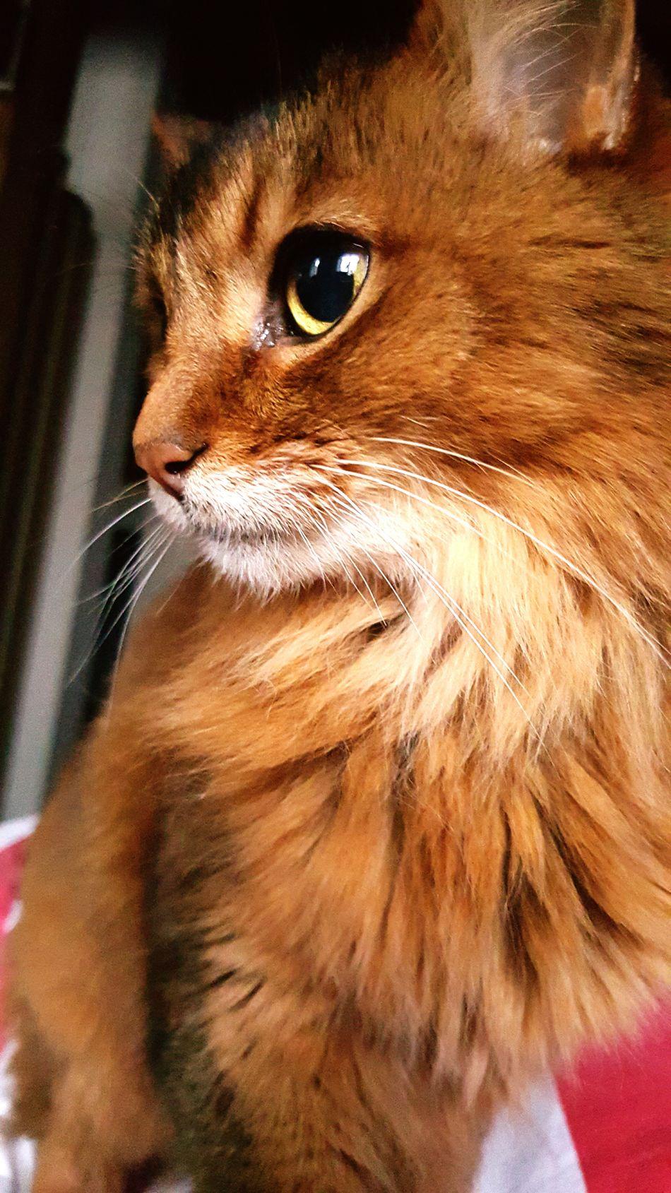 Cat♡ Beauty Of Nature Catportrait