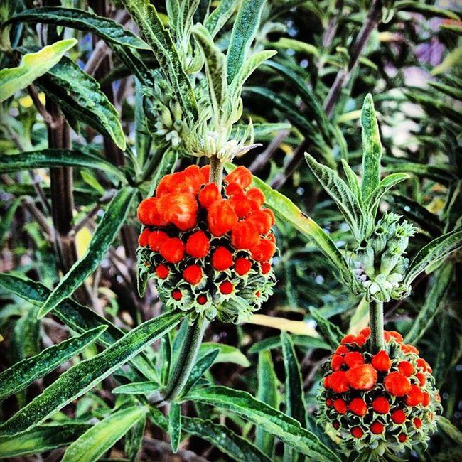 #jj_forum_0347 #flower #fillsmyheartwithhappiness #garden #plant #beauty #igers #icatch #instalove #instamood #icoloramas #instagramers #coloronroids #coloraesthetics #happycolortrip #allshots #dhexpose #popyacolor #pixoftheday #photooftheday #green #ti_ Happycolortrip Icoloramas Garden Coloraesthetics Flower Popyacolor Beauty Coloronroids Green Dhexpose Photooftheday Csummerpic Plant Ti_break Fillsmyheartwithhappiness Credpic Allshots Jj_forum_0347 Instamood Igers Instagramers Icatch Instalove Pixoftheday