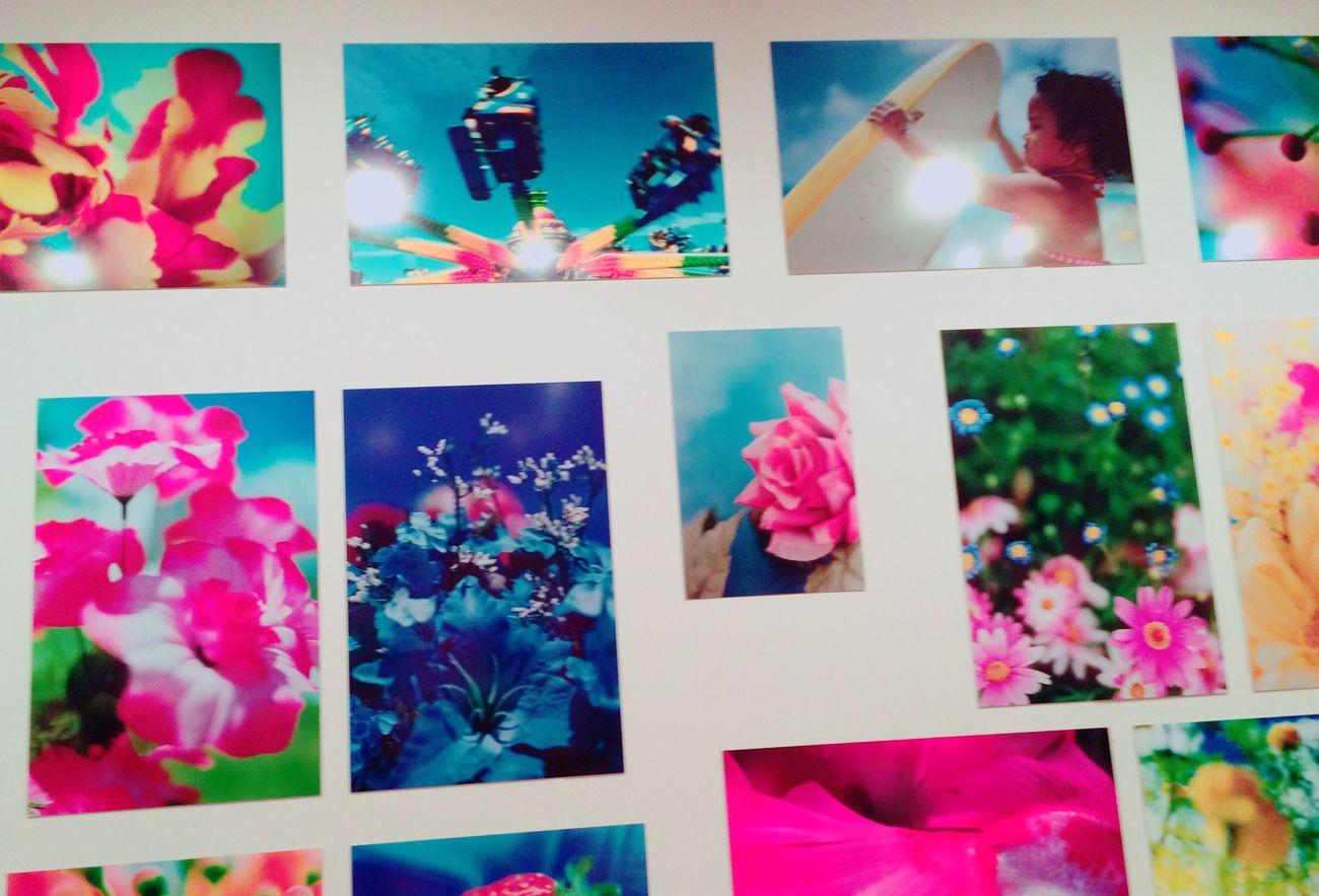 蜷川実花 花 Flowers Japan