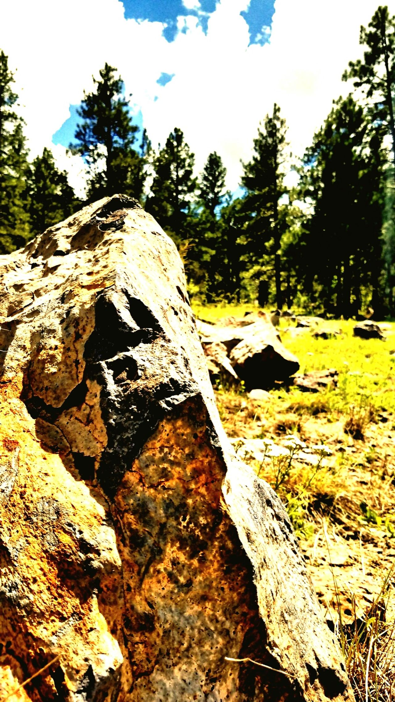One individual rock. Sunlight Tree Nature Tree Trunk Sky Growth Day Close-up Wilderness Outdoors MyPhotography Pattern, Texture, Shape And Form LoveMyWork Rock Mywork Photooftheday Myphotography. Nature Scenics Rock - Object