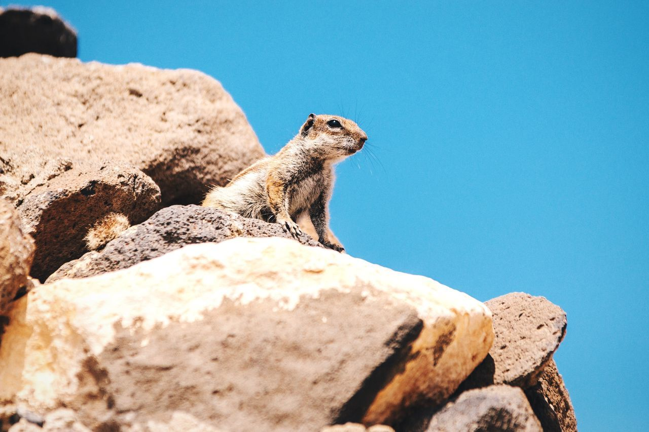 Beautiful stock photos of eichhörnchen, Alertness, Animal Themes, Blue, Clear Sky