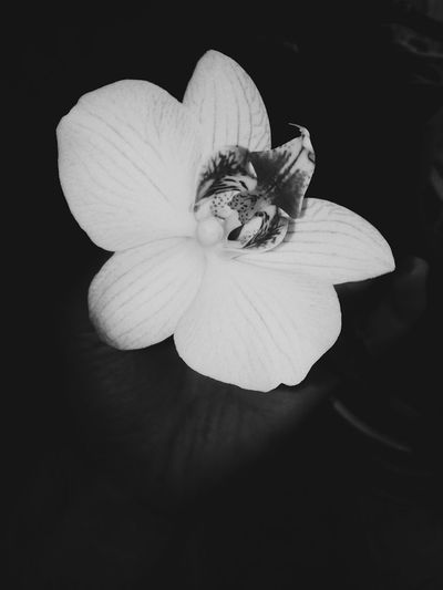 Orchid White Black