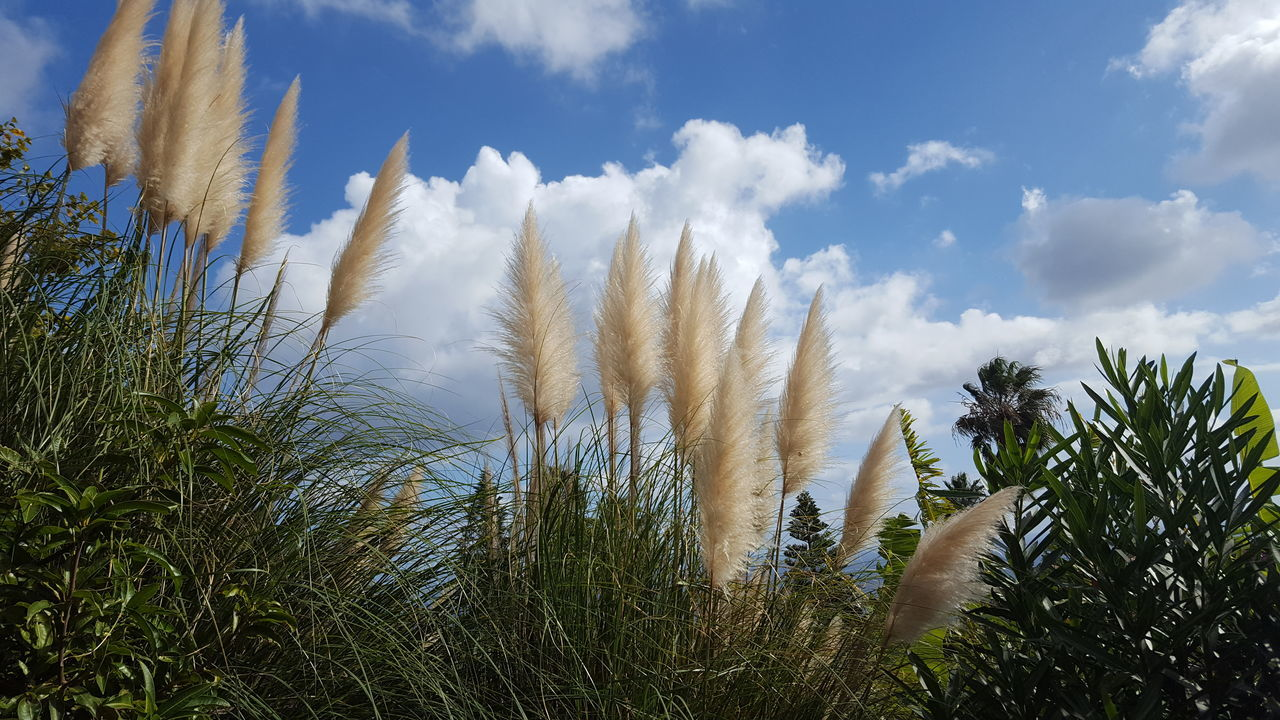growth, nature, beauty in nature, tranquility, tranquil scene, sky, day, outdoors, no people, scenics, plant, low angle view, grass, close-up