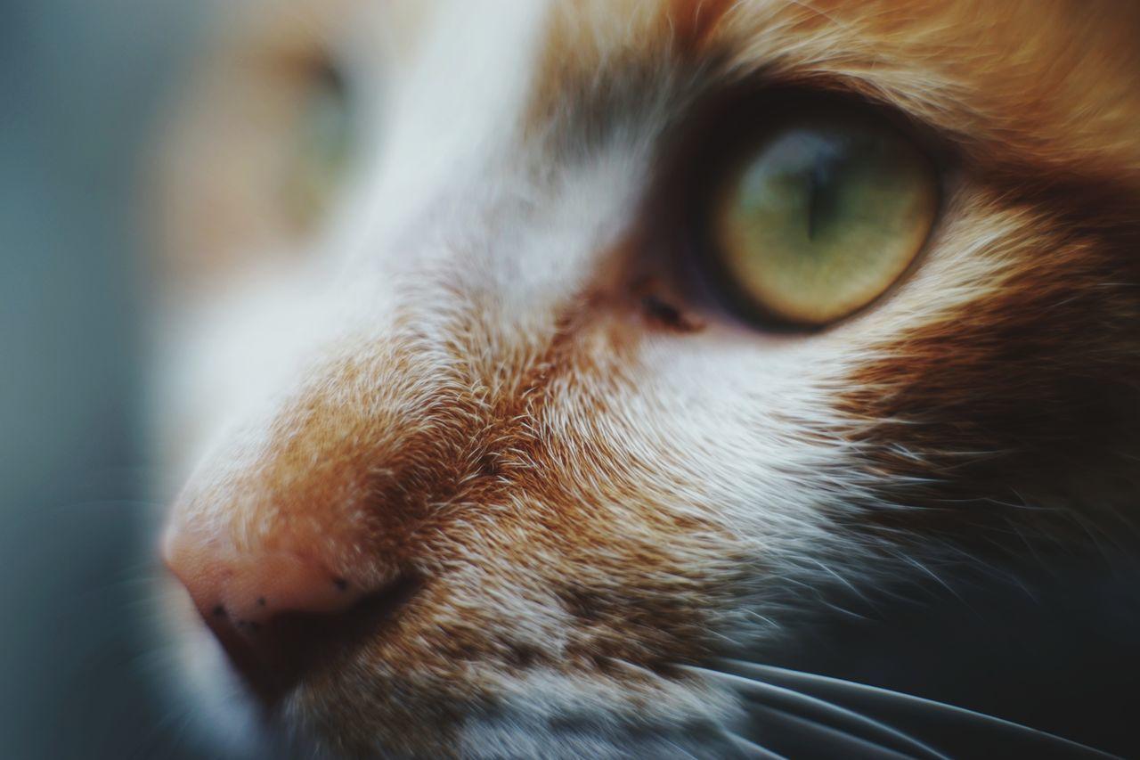 Beautiful stock photos of animals, pets, domestic cat, domestic animals, one animal