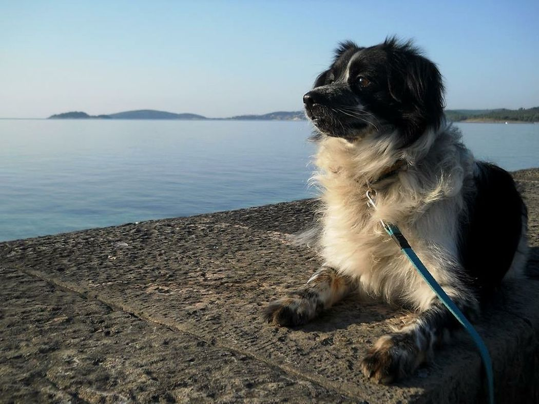 Dog Animals Pets Seaside Sea Croatia Peljesac Summer Dogs