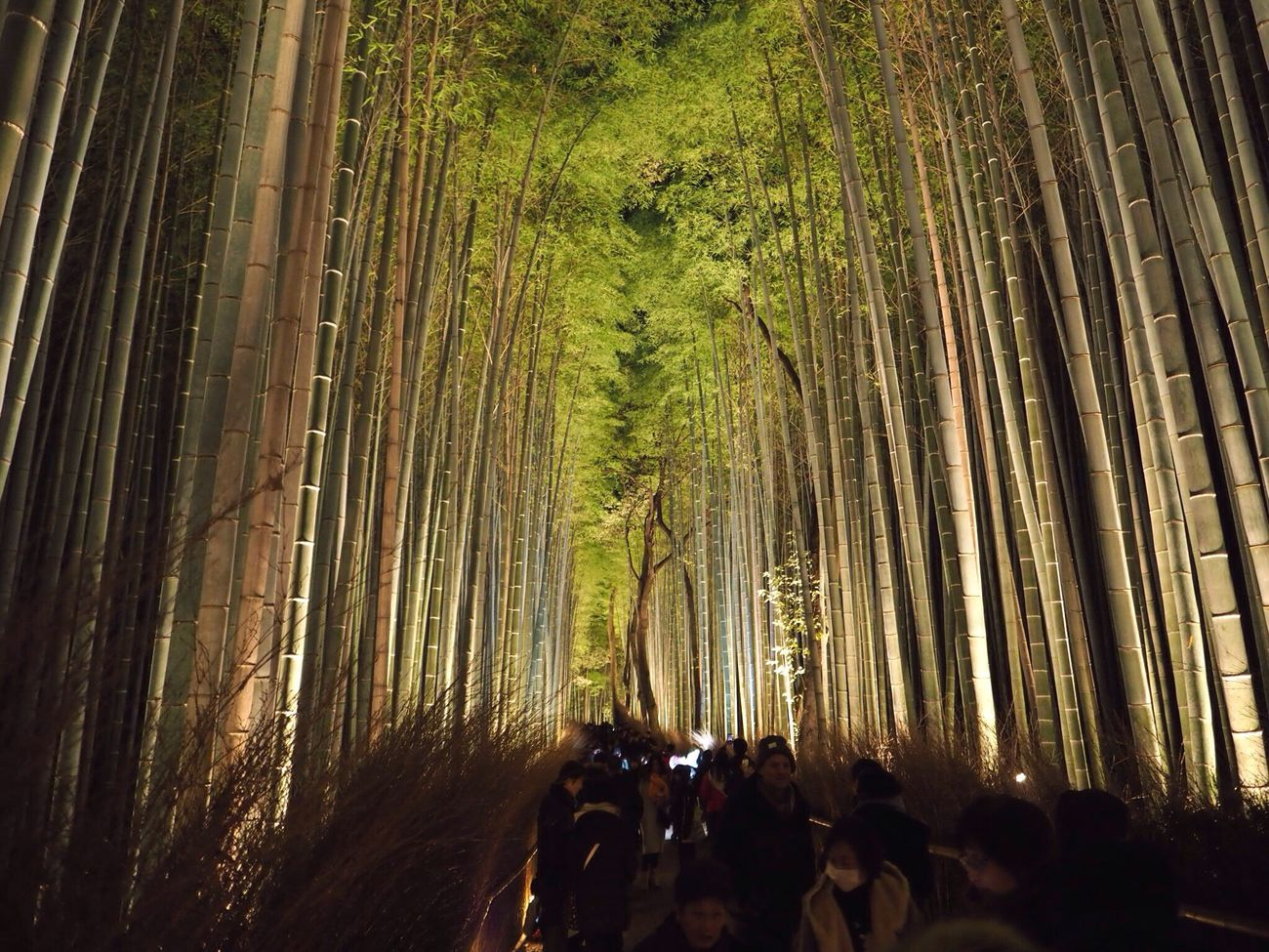 Kyoto Japan Arashiyama Chikurinnokomichi Bamboo People Lightup Night Olympus PEN-F 京都 日本 嵐山 竹林の道 ライトアップ 夜 人々 竹