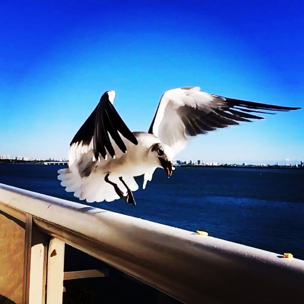 Miami FL🇺🇸☀️ THE BIRD All_shots #Portrait #Vscocamphotos #Likesforlikes #Photographs #Photographylovers #TopLikeTags #Outdoorphotography #Likesreturned #Silhouette #Likeforlike #Art #Contrast #Landscaped #TagStaGram #love #friends #tagstagram #photooftheday #selfie #amazing #f EyeEm Hdr_Collection HDR Photography Miami The Moment - 2015 EyeEm Awards EyeEm Best Shots Tasteofnature #awesome #best #cool #stephiscool #top #topnewfollowers #fantastico #instagram #sound #soundhound #applemusic #digital #model #beautiful #photos #photography #amazing #usa #socialmedia #social #nature #street #streetart #instagram #video #vi EyeEm Gallery