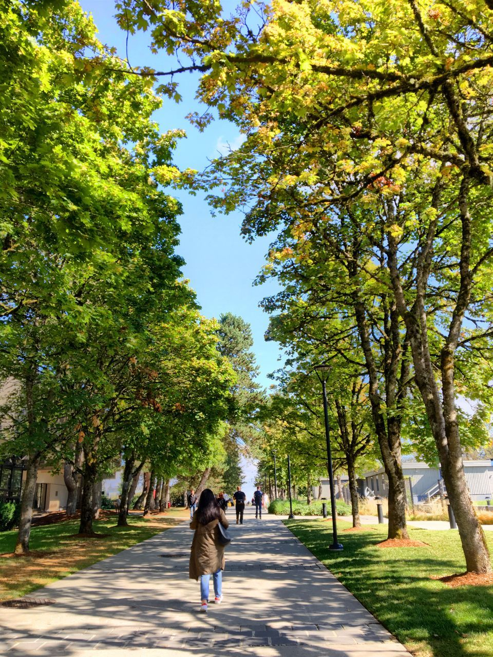 tree, full length, rear view, walking, the way forward, growth, day, real people, road, nature, outdoors, branch, two people, women, men, beauty in nature, sky, people