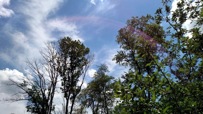 My view while sitting in my yard on Memorial Day. Hanging Out Taking Photos Relaxing Enjoying Life Outdoors No People Beauty In Nature Day Non-urban Scene Trees Clouds And Sky Sunflare